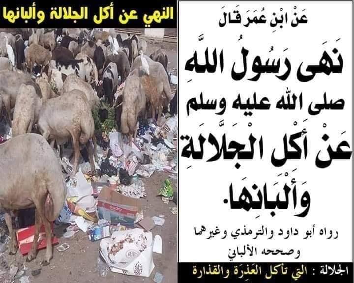 L'interdiction de manger la bête qui mange les excréments et la saleté, ainsi que de boire leur lait.