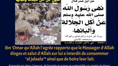 L'interdiction de consommer la bête qui mange les saletés et excréments et de boire leur lait.